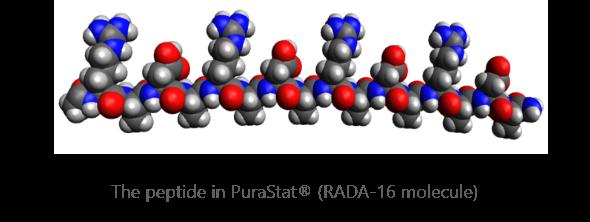 RADA-16 molecule